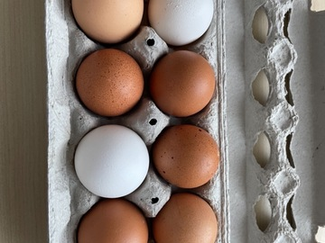 Selling Without Online Payment: Farm fresh free range eggs