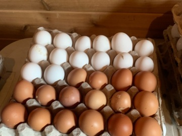 Selling Without Online Payment: Free run eggs
